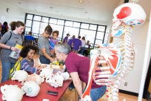 Maya Garay talks to forensic anthropologist Anthony Falsetti about his work during ASU Open Door at West Campus on Saturday Feb. 10th, 2018 in Glendale, Ariz.